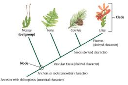 Two Adaptations Of The Plantae Kingdom When Plants Began To Grow On Land They Needed To Be Able To Get Water So One Adaptation Is Their Leaves With A Waxy